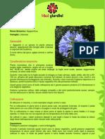 Agapanto.pdf