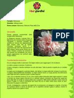 AlceaRosea.pdf
