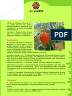 Alkekengi.pdf