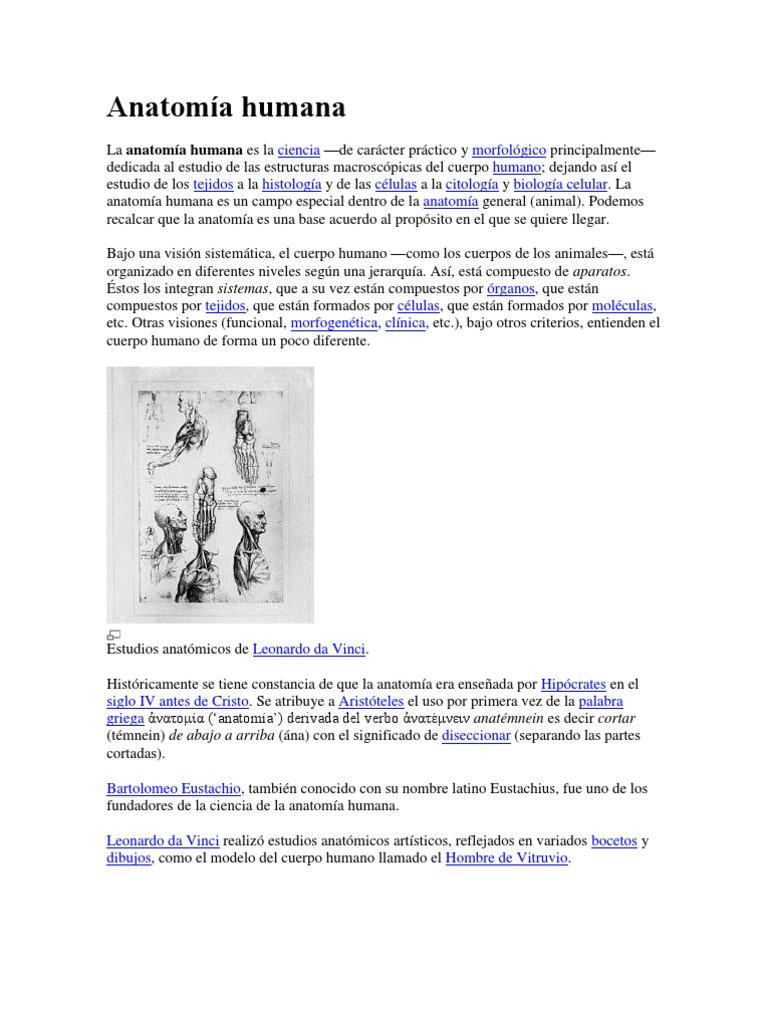 Excelente La Anatomía Del Cuerpo Motivo - Anatomía de Las ...