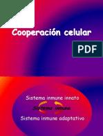 Cooperacion Celular (Inmuno)