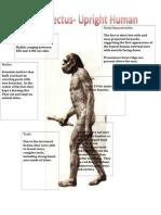 master homo erectus detailed input