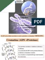 d. Cromatina y Cromosomas 2013-I (2)