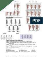 Vertucci Classification and More