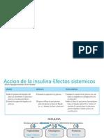 accion insulina