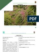 Flora Nectarifera y Polinifera Del Estado de Chiapas