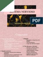 Estructura_y_organización_sistema_nervioso_1