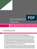Determinación sexual