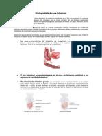 Etiología de la Atresia Intestinal