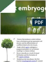 Plant Embrogenesis
