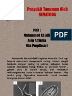 Penyakit Tanaman Oleh NEMATODA