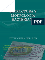1.MORFOLOGIABACTERIANA (2)