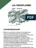 Curs 6 - Reticulul Endoplasmic