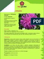 AstroPiumaDiStruzzo.pdf