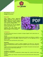 Aubretia.pdf