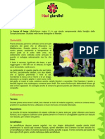 BoccaDiLeone.pdf