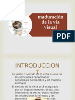 Desarrollo via Visual