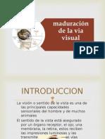Desarrollo via Visual