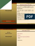 Imágenes Atlas HistológicoV