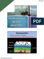 03 MORFOLOGÍA DE LOS INSECTOS