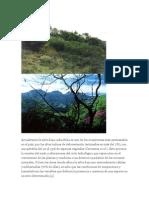 Actualmente la selva baja caducifolia es uno de los ecosistemas más amenazados en el país.doc