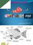 ikan hiasan tahun 5.bahagian luar ikan hiasan dan fungsi serta spesis ikan hiasan