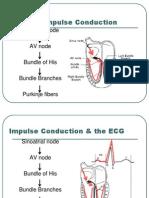 #ECG Module 1