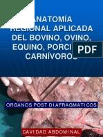 órganos POST DIAFRAGMÁTICOS