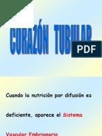 01. CORAZÓN  TUBULAR