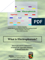 Electrophoresis on Agarose Gel - Student