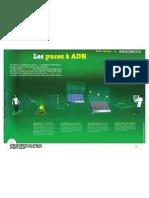 affiche_infographie_cea_puce-ADN.pdf