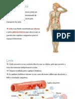 informação 2 sistema linfático