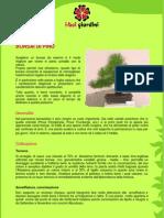 Bonsai di pino.pdf