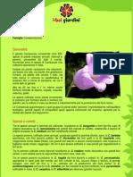 Campanula.pdf