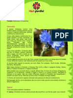 Centaurea.pdf