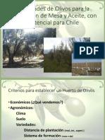 04- Variedades de Olivos para la Producción de Mesa