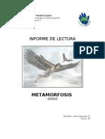 Informe Metamorfosis.doc