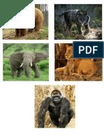 Animales Materiales y Estados