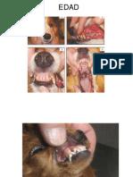 05.- Cronometría Dentaria