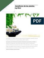 Conoce los beneficios de las plantas según el Feng Shui