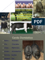Historia Del Cerdo