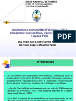 Cheilomenes-sexmaculata Exposic - Cuzco