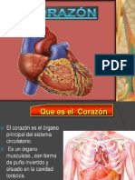 Diapositivas Del Aparato Circulatorio