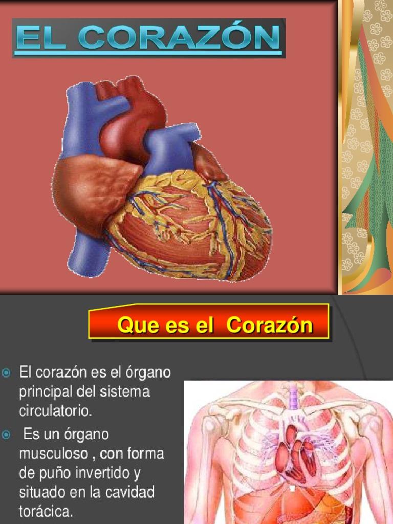 Circuito Circulatorio : Diapositivas del aparato circulatorio sistema circulatorio arteria