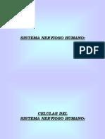 neurionas