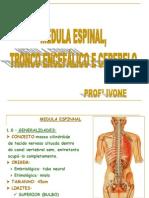 Médula espinal, tronco encefálico  e cerebelo