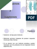 C-HAPTENOS-EXPOSICIÓN ORIGINAL