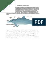 Informacion Sobre Delfines
