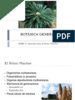 Tema V BOTÁNICA GENERAL Plantae