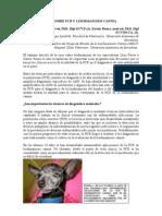 7. Faq Sobre Pcr y Leishmaniosis Canina